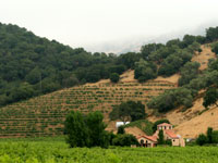 A view of Steltzner Vineyards