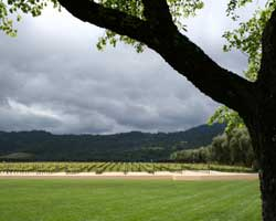 A vineyard during a moody day in Napa Valley