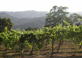 Justin Vineyards in Paso Robles