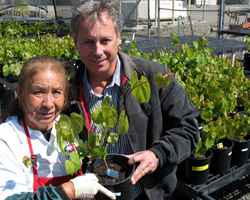 UC Davis' Connie Lopez hands one of the new rootstocks to Jim Pratt, owner of Cornerstone Certified Vineyard