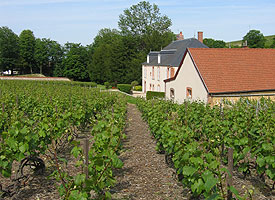Champagne Vineyards Report Record Harvest Numbers, Having Grown Enough Grapes to Produce 389 Million Bottles of Wine
