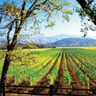 The Vineyard at Calistoga Ranch in Napa Valley, one of our Top 10 Wine Country Inns in the U.S.